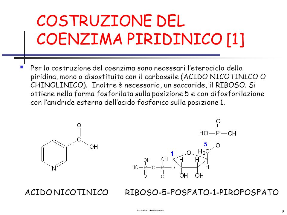 COSTRUZIONE DEL COENZIMA PIRIDINICO [1]